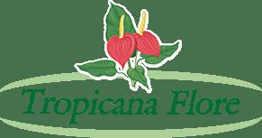 Pépinière, traitement de palmier et espace vert Var et Alpes-Maritimes